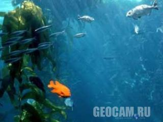 Подводная веб-камера в аквариуме Monterey Bay
