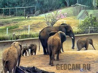 Веб-камера в вольере у слонов