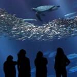Подводный мир в океанариуме Monterey Bay